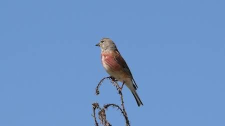 Die Vogelwelt ABGESAGT