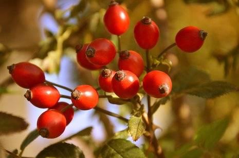 Rundgang mit Einsammeln von Wildfrüchten und Kräutern