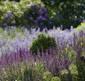 Die Welt der Pflanzen und Kräuter