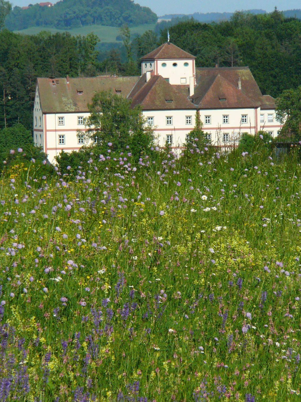 Schloss Langenstein Aussaat 1991