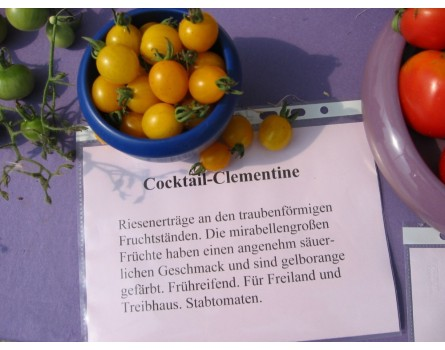 Tomatensorte Cocktail-Clementine