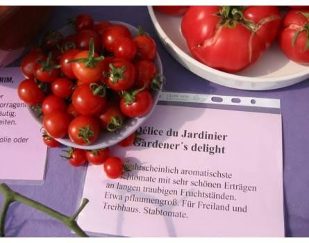 Tomate, Tomate, Gardener´s delight