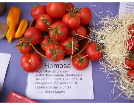 Tomatensorte Homosa