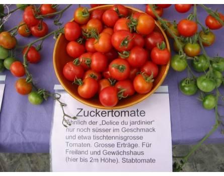 Tomate, Zuckertomate (Bio-Saatgut)