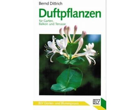 Duftpflanzen für Garten, Balkon und Terrasse