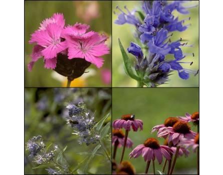 Schmetterlings- und Bienenparadies