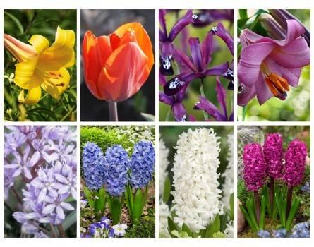 Duftendes Blumenzwiebelbeet