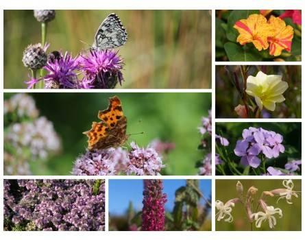 Faltertreff im Garten - Pflanzen für Tag- und Nachtfalter