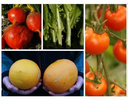 Samenpaket für den Gemüsegärtner