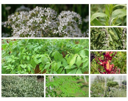 Green Smoothie Pflanzen