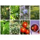 Kräuter und Gemüse für die Fensterbank