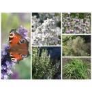 Samenpaket: Insektenvielfalt