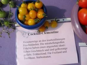 Tomatensorte Cocktail-Clementine