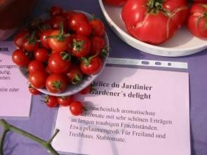 Tomate, Gardener's delight
