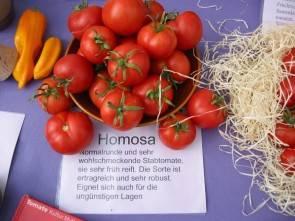 Tomate, Homosa (Bio-Saatgut)
