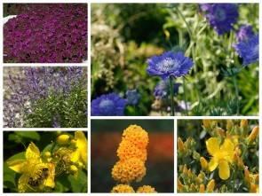 Bunte Blüten mit reichlich Nektar