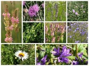 Heimische Blumen - Lebendige Gärten