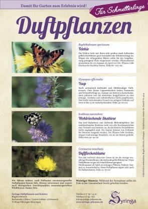 Samen-Set Blumig, für Schmetterlinge