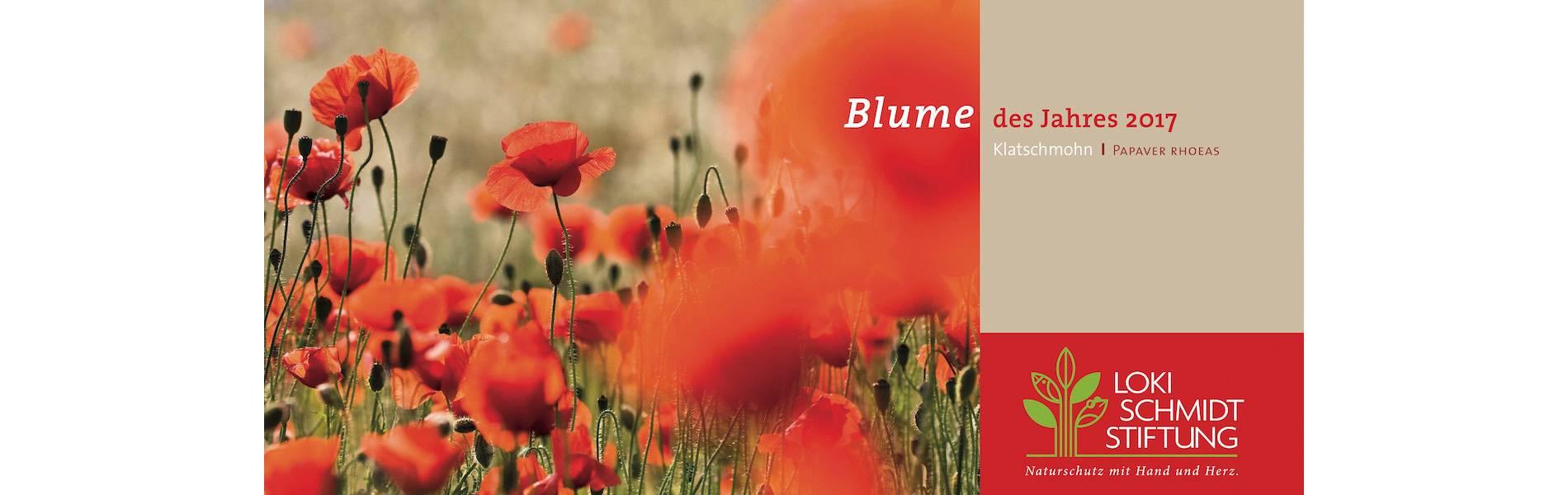 Blume_des_Jahres_Vorderseite_2_12.9.16