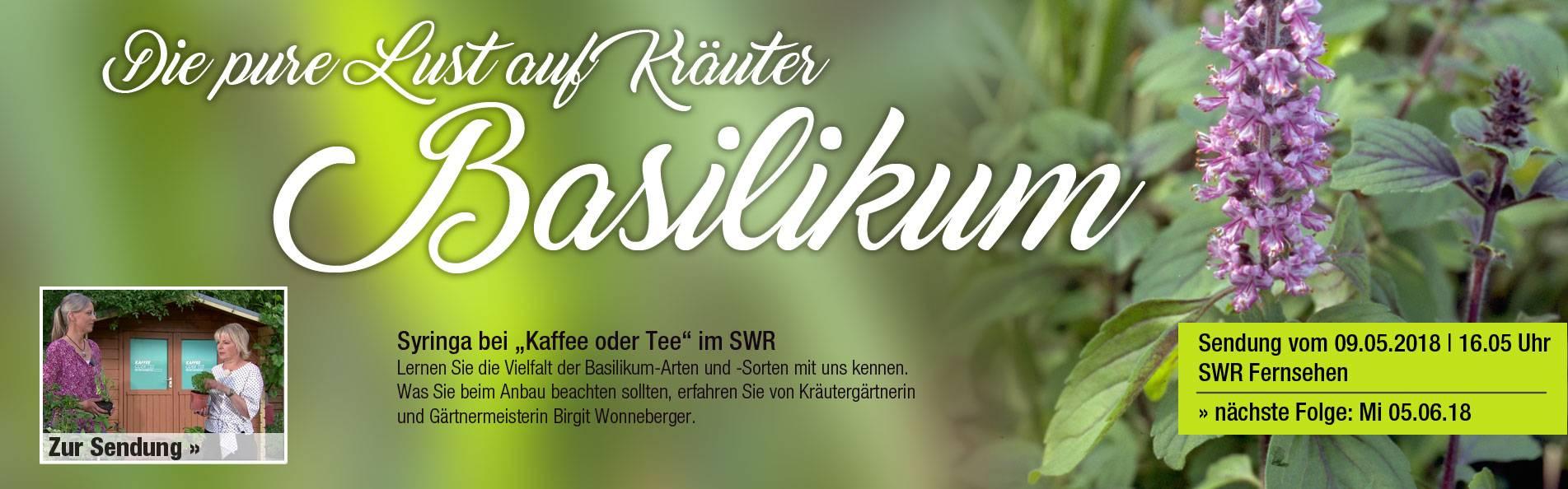 SWR_basilikum_1