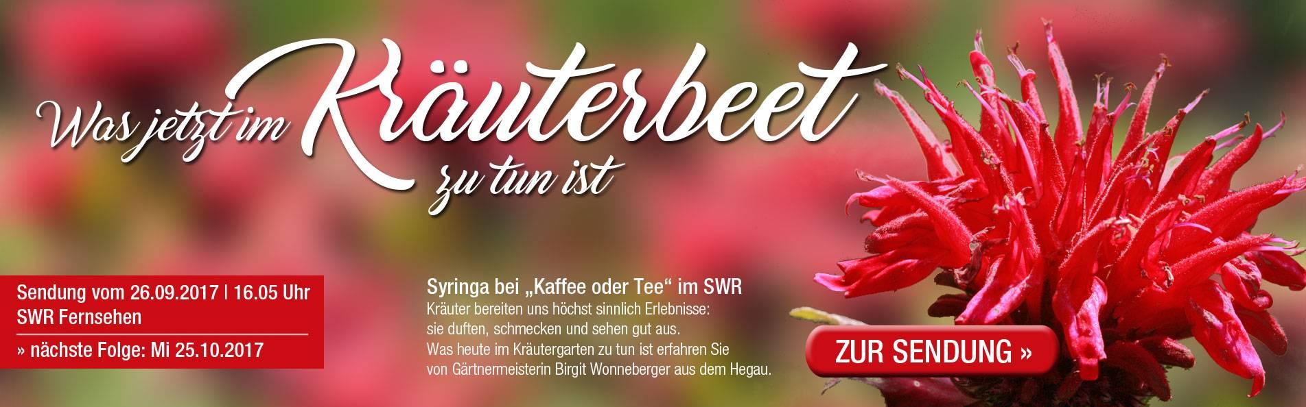 SWR_kraeuterbeet