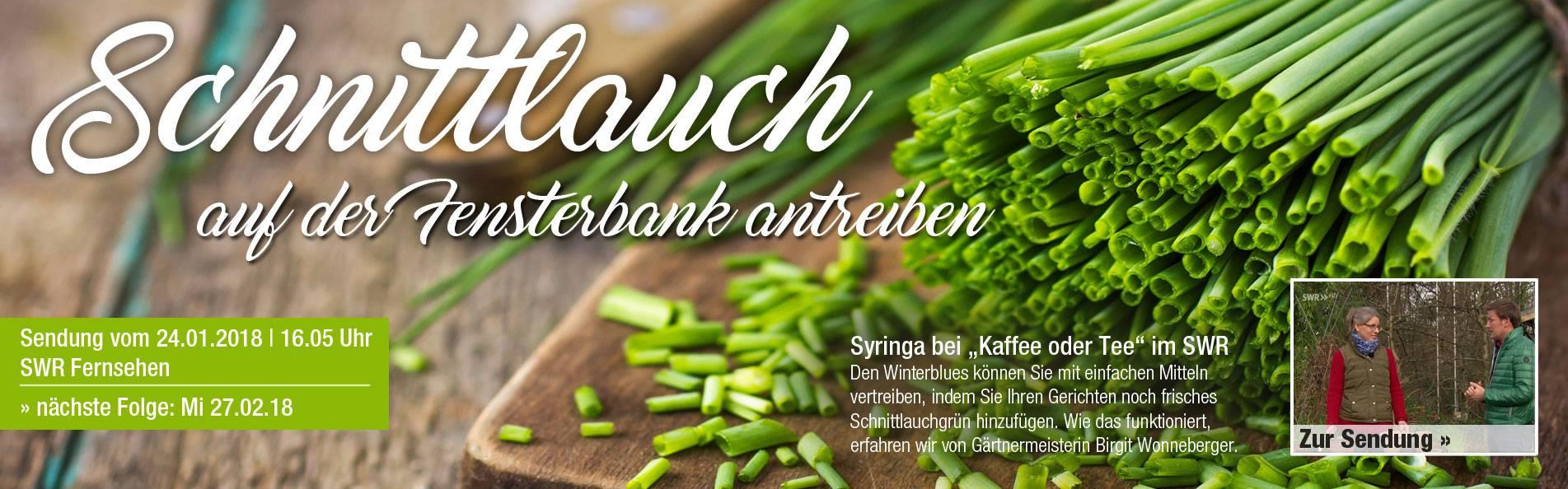 SWR_schnittlauch