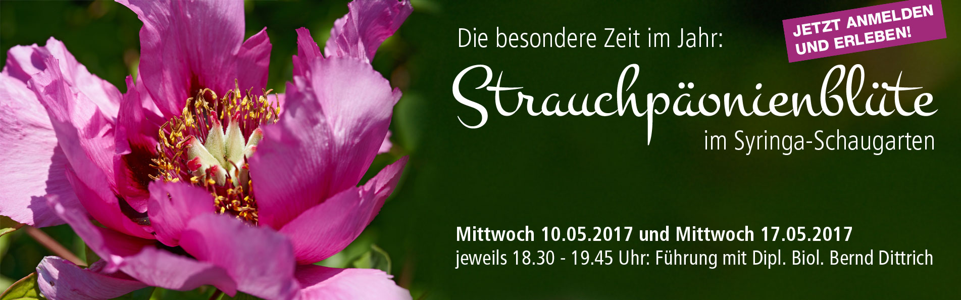 Slider_Strauchp_onienbl_te_im_Duftgarten
