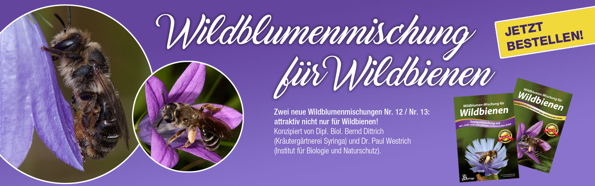 slider_Wildbienen