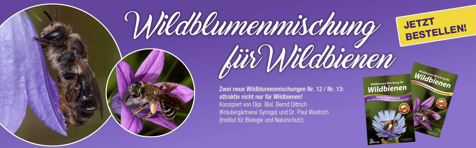 slider_Wildbienen